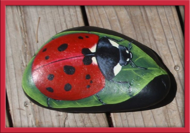 painted ladybug rocks 29 best images about rock insect on frogs 2597