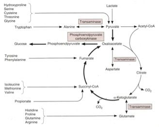 contrast catabolic and anabolic pathways and give an example of each