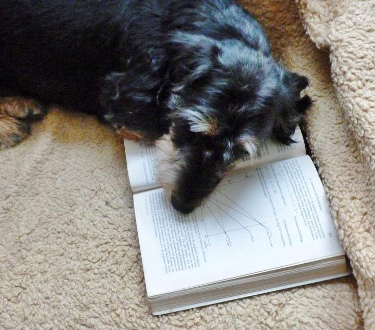 ............wenn der Chef seine Bücher herumliegen läßt  bilde ich mich auch mal