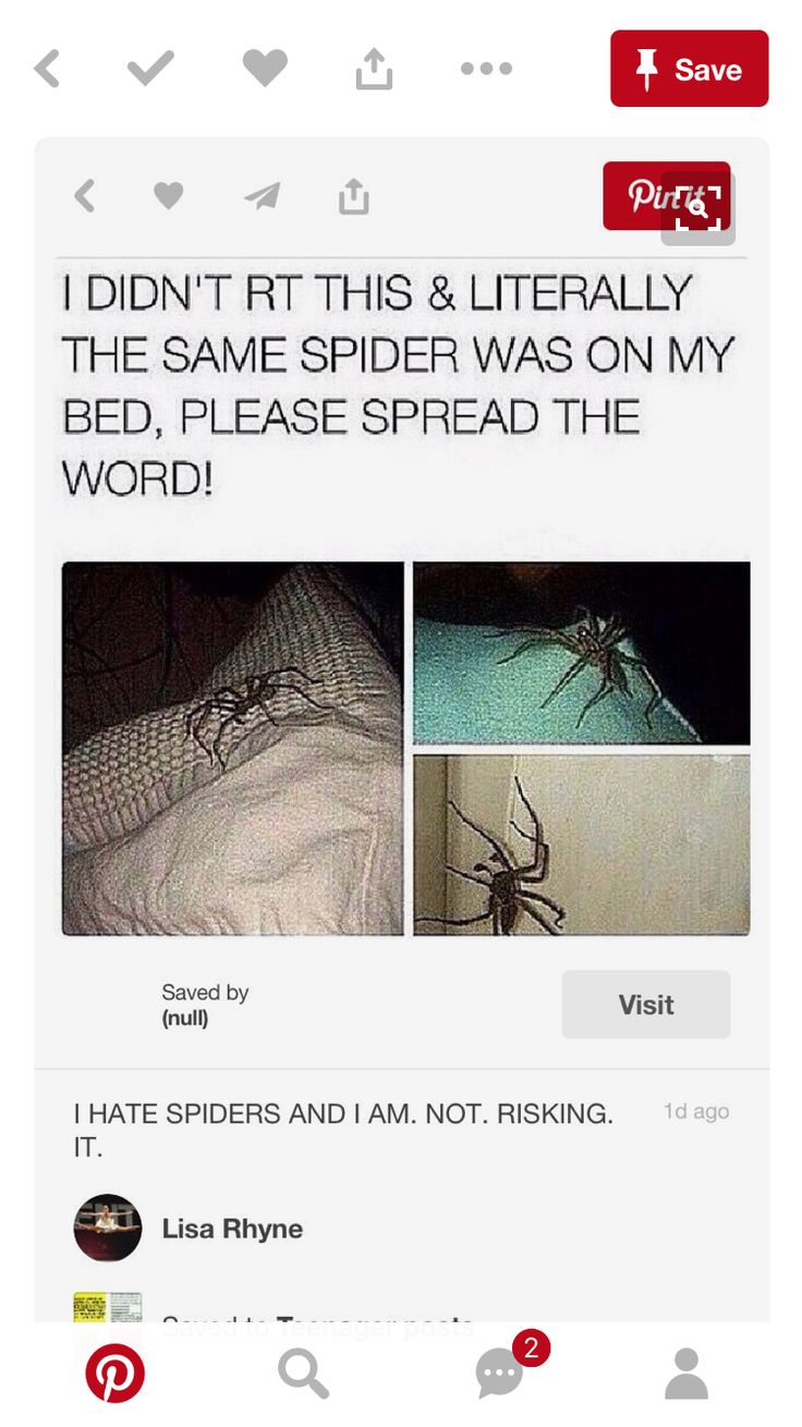 Literally a hobo spider. Not today, 8-legged Satan! Not risking it<<I'm not scared of spiders