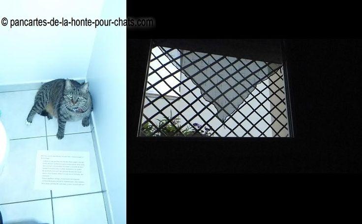 «Ben oui, encore moi Noaro, et cette fois c'est d'une pierre deux coups! – Comme je suis porteur du sida des chats, papa a mis des treillis de bois au fenêtres (pour éviter que je …