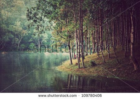 needs to be filtered with some yellow/golds - Forest Stock Photos, Images, & Pictures | Shutterstock