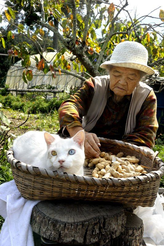 Miyoko Ihara has been taking photographs of her grandmother, Misao and her beloved cat Fukumaru since their relationship began in 2003. Their closeness has been captured through a series of lovely photographs. 11-16-12 / Miyoko Ihara
