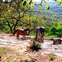 Bush lodge accommodation within the Croc  River Mountain Conservancy, 40 mins from Nelspruit, 30 mins from Kruger. Pets welcome!