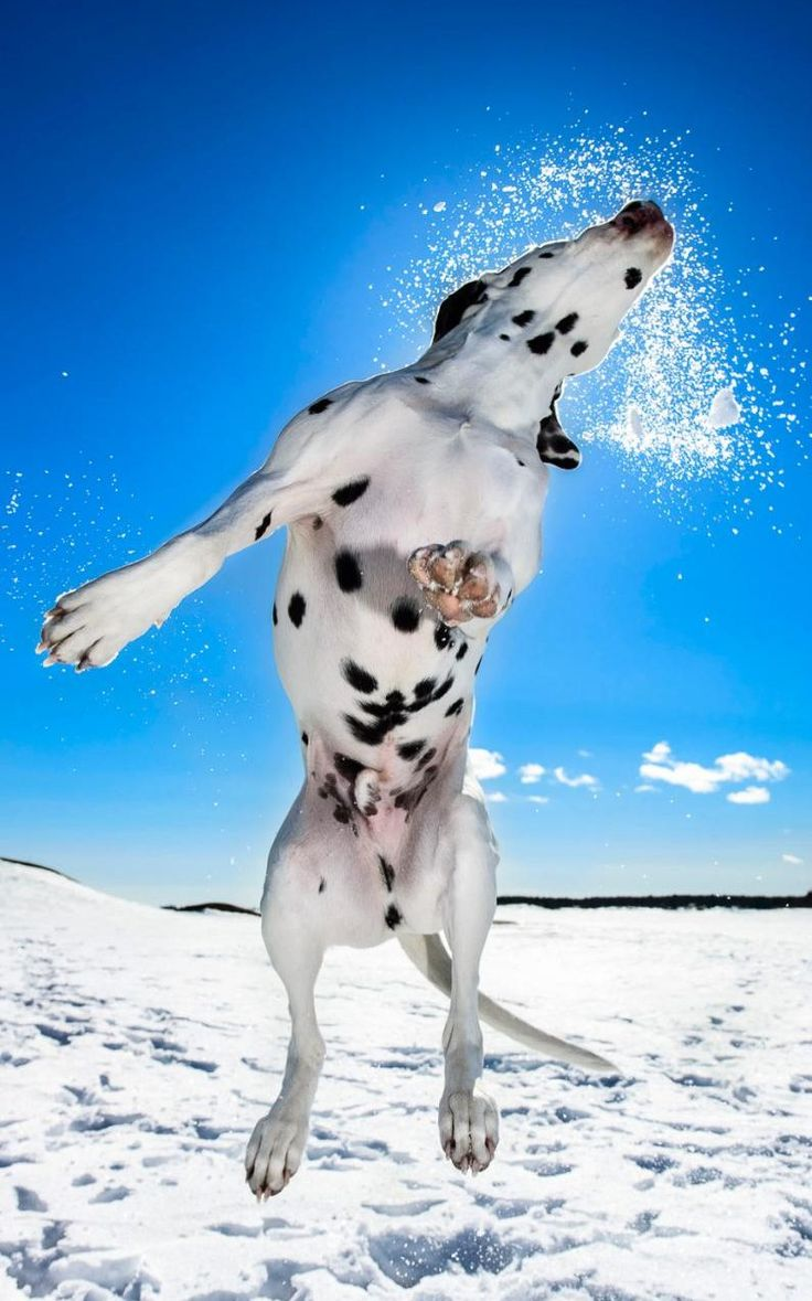 """magicalnaturetour: """"  A photograph taken by Daniel Nygaard, winning 3rd place in the Dogs at Play category in the Kennel Club Dog Photographer of the Year competition CREDIT: DANIEL NYGAARD/PA  """""""