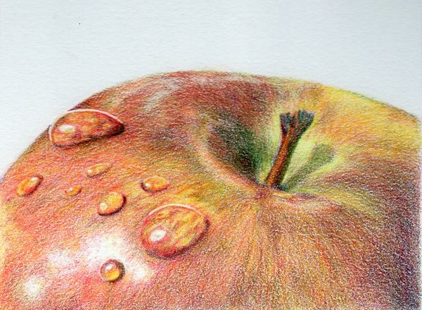 Colored Pencil Art stilllife | UKCPS - David Richards | Art / Colored Pencil / Still Life