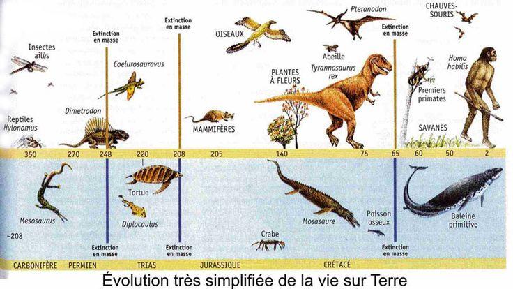 Evolution Très simplifiée de la vie sur Terre Dinosaures