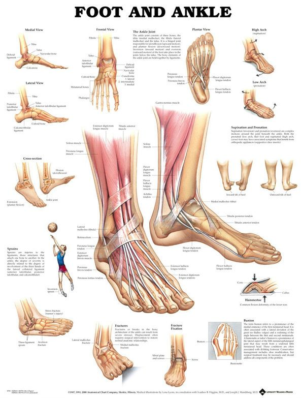 75+ best anatomy images by Carmen Reyes on Pinterest   Physical ...
