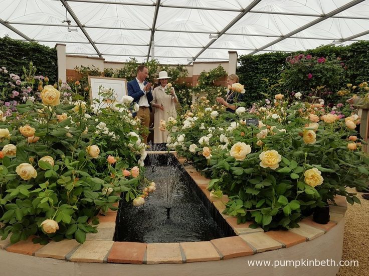 David Austin Roses and Liccy Dahl launch Rosa 'Roald Dahl' to commemorate the centenary year of Roald Dahl's birth, in The Great Pavilion,…