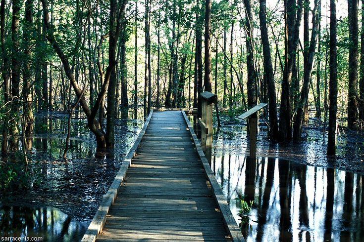 Wetlands, Beaumont Texas