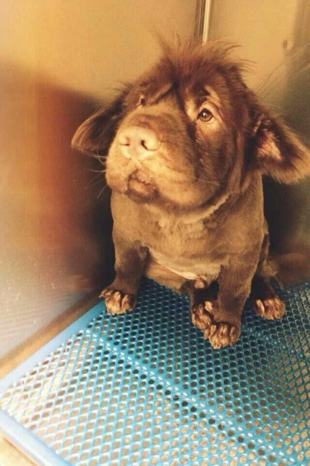 These Dog Breed Mixes Are So Awkwardly Cute - Dalmachshund | Guff