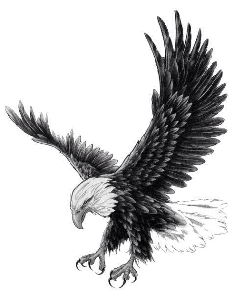 best 20 eagle tattoos ideas on pinterest. Black Bedroom Furniture Sets. Home Design Ideas
