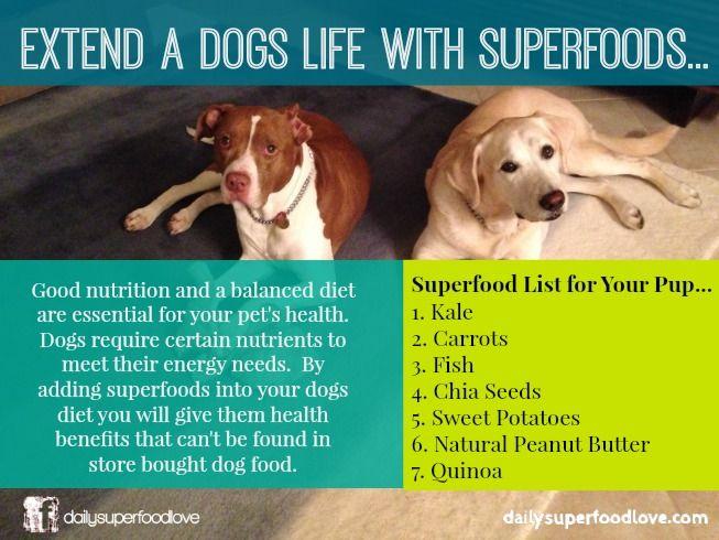 Homemade Dog Food For Liver Failure