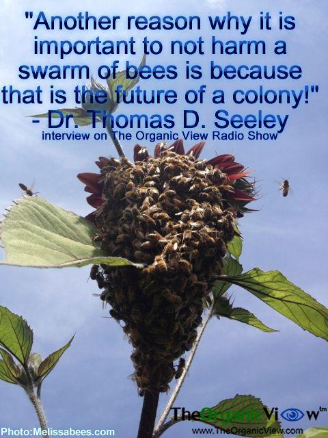 https://i.pinimg.com/736x/de/33/88/de33880bba2b1843407987644dc73bde--swarm-of-bees-the-future.jpg
