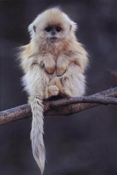 fuzzy fluffy adorableness