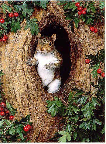 Here's a little Christmas squirrel! :)