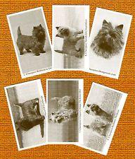 Cairn Terrier по имени набор из 6 собаки фото торговые карты