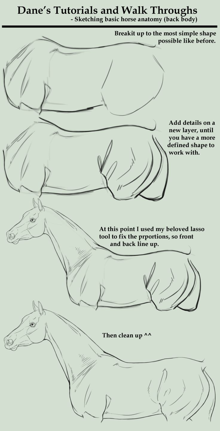 How to draw a horse. Tutorial/Walk Through - sketching a horse body