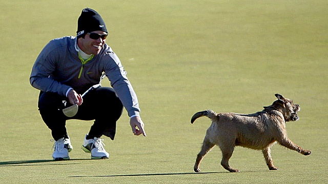 Paul Casey has some Ruff luck at Dunhill Links as the dog runs away with his ball!
