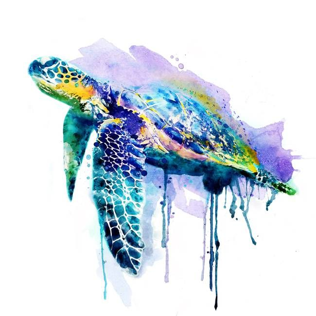 Watercolor Sea Turtle By Marian Voicu Sea Turtle Art Turtle