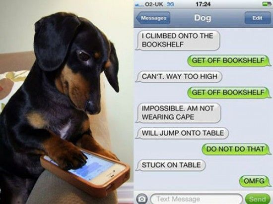 If Dogs Could Text The Conversations Would Be Like This (10 Photos)