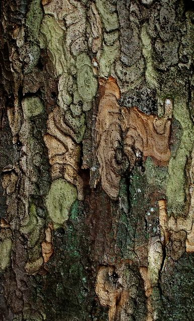 Nature's patterns / texture / écorce / arbre
