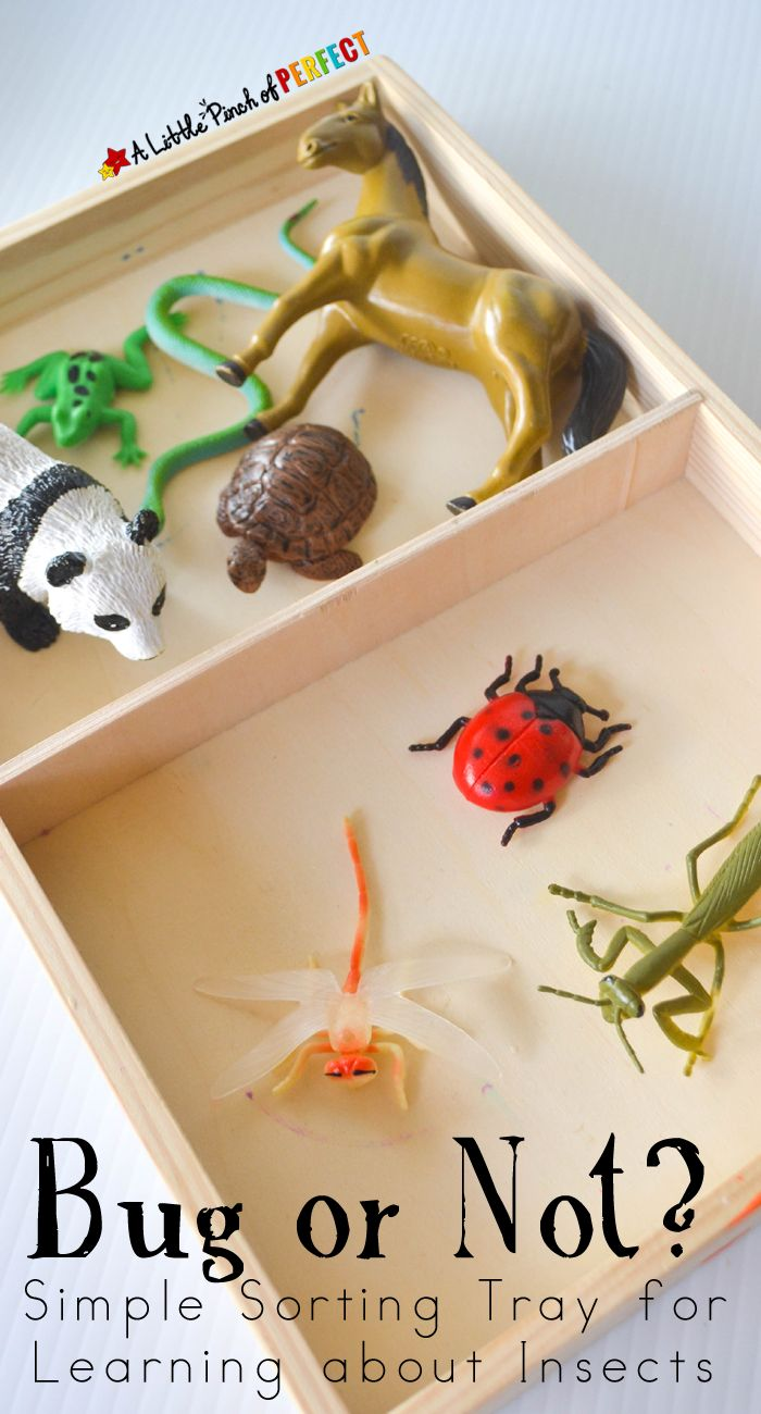 Bug or Not? Simple Sorting Tray for Learning about Insects (preschool, spring)