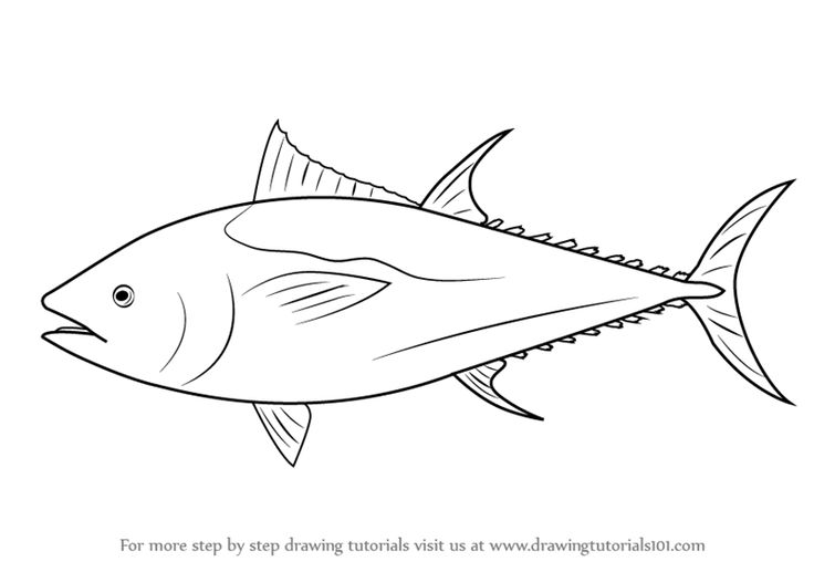 Learn How to Draw an Atlantic Bluefin Tuna (Fishes) Step by Step : Drawing Tutorials