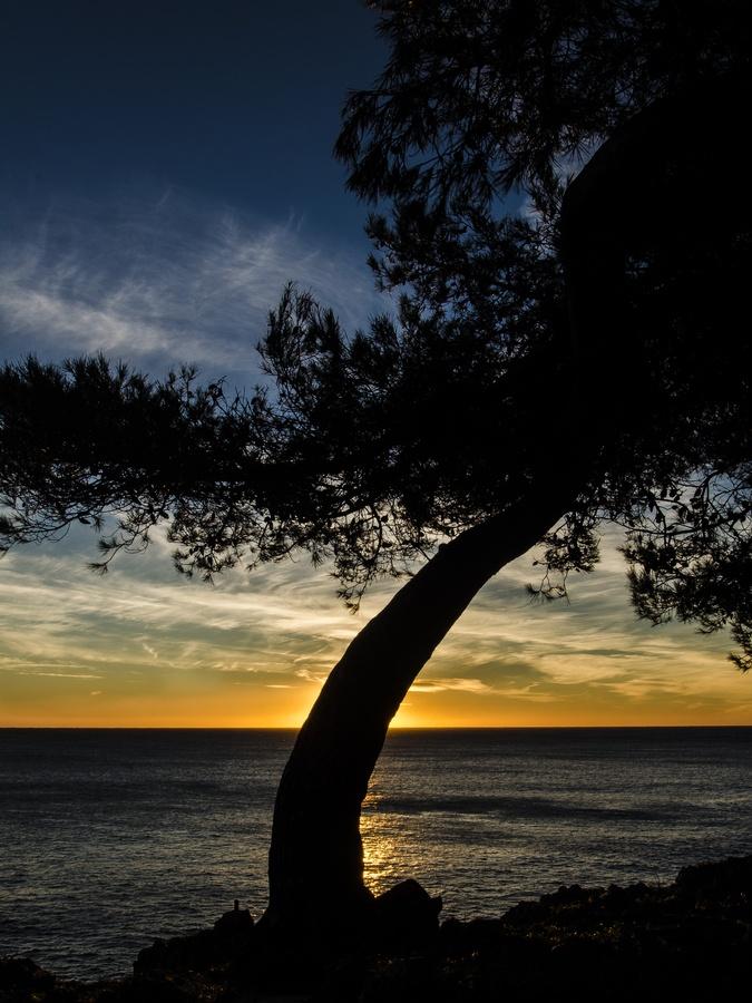 Maritime Pine by Alessandro Baffa
