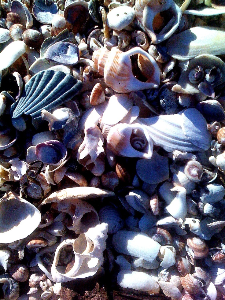 Shells at Mount Maunganui, Tauranga, New Zealand   Favorite Places & Spaces   Pinterest   We ...