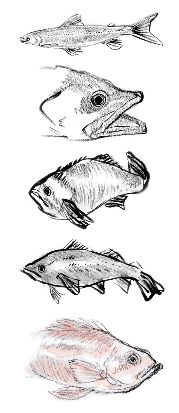 25 best fish anatomy ideas on pinterest fish sketch how to