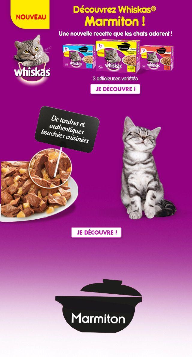 Comme chacun sait, les chats sont des mangeurs très difficiles, ce qui implique une alimentation très appétissante.La plupart d'entre eux préfèrent le poisson à la viande et les aliments nouveaux à ceux déjà connus, comme l'ont parfaitement compris les fabricants ...