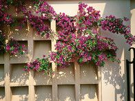 A lattice garden wall is planted with trailing summer flowers. A wall or fence in a garden is made from a variety of materials, brick being the most popular, followed closely by concrete, wood, and metal. Material should blend with setting.