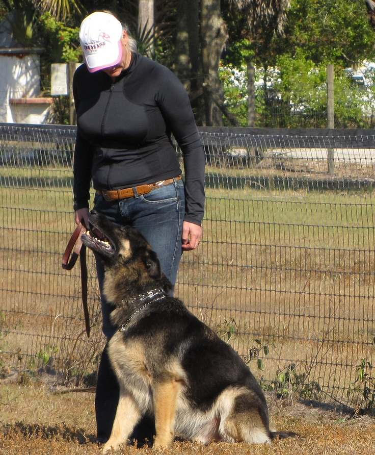 How to Log Your Dog Training -- via wikiHow.com