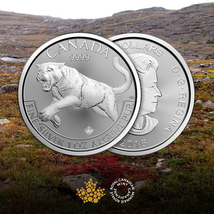 The first of the Canadian predator series, the cougar is one of Canada's most elusive predators. This massive tawny cat stalks the landscapes where its prey lives, from the seaside and deserts to the Rocky Mountains and forests. Start your predator collection and purchase your 1oz Cougar Silver Coin today!