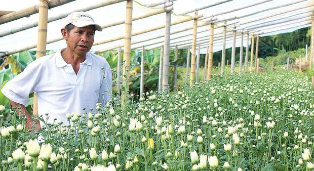 Jose Isaac Montano y su cultivo. / Fotos Yeissón Yondapiz.