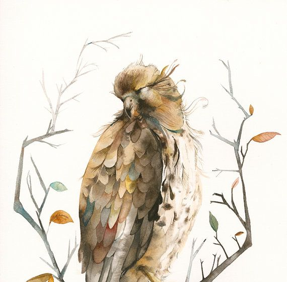 Red Tailed Hawk  11  x 17 Archival print by amberalexander on Etsy