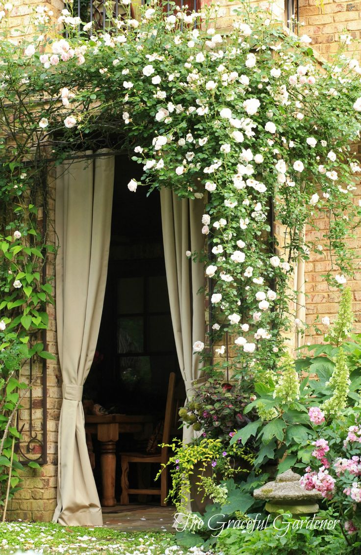Idea for french doors on side of house leading to courtyard - maybe use Wisteria Vine instead (sunlight in Winter/Shade in Summer)