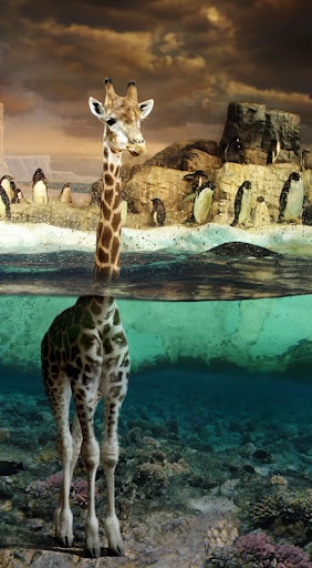 Giraffes and penguins together, aww