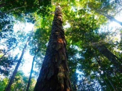 Amazon rainforest more able to withstand drought than previously thought.New research suggests that the Amazon rainforest may be more able to cope with dry conditions than previously predicted. Researchers used a computer model to demonstrate that, providing forest conservation measures are in place, the Amazon rainforest may be more able to withstand periods of drought than has been estimated by other climate models.ScienceDaily