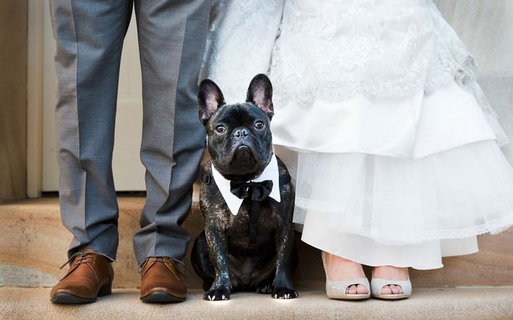 Would you have your fur friend walk you down the aisle