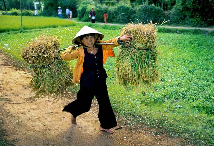 Rice farm, Qui Nhon by David May on 500px