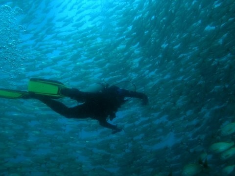 Turnkey Diving Business!