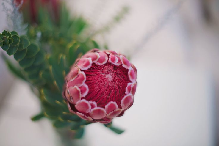 Beautiful proteas are scattered throughout our residences at The Last Word.