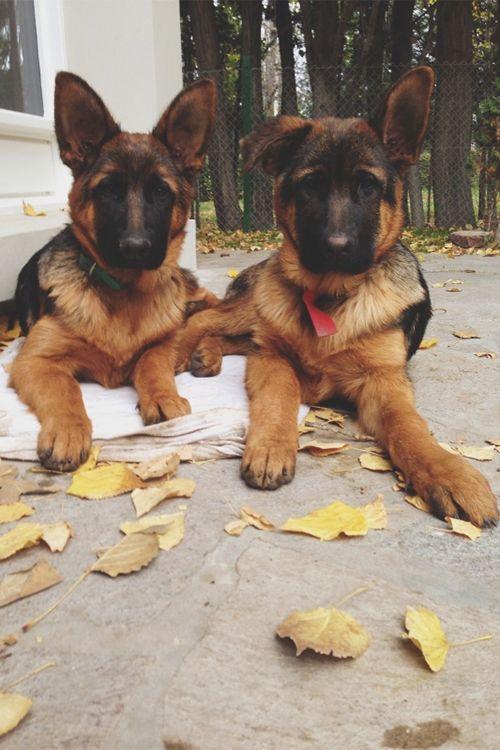 An adorable pair!