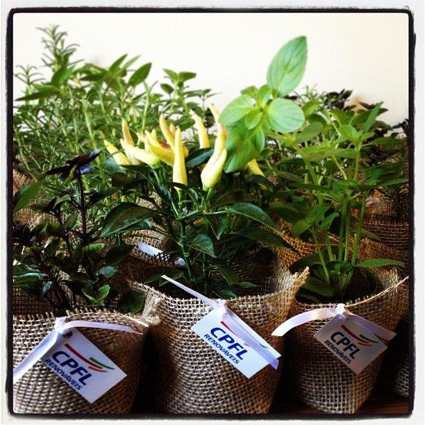 Amanhã é dia do meio ambiente! 1000 ervas e temperos serão distribuídas na CPFL!!! Semana do meio ambiente. Pequenas atitudes fazem jma grande diferença! #lepetitvert #lembrancinha #meioambiente #ervas