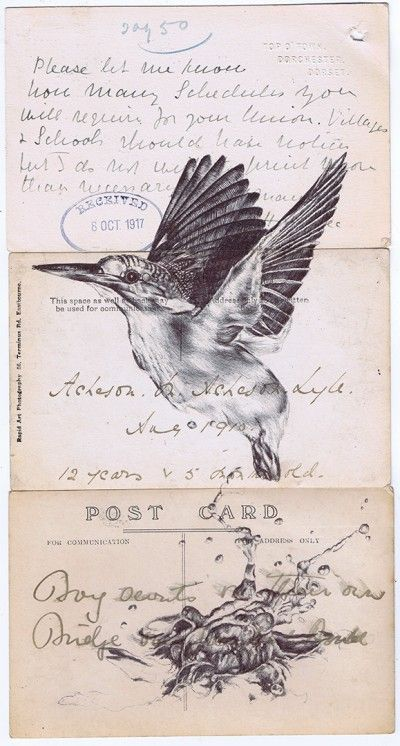 Birds | Mark Powell Artist
