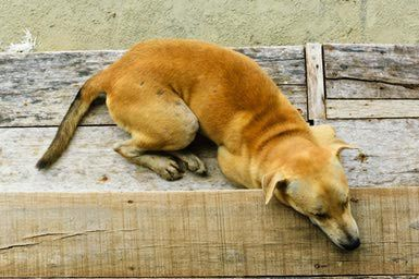 Seizures and Brain Diseases in Dogs