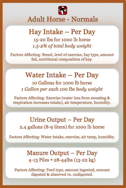 Equine quick reference - vitals & anatomy - Horse Side Vet Guide app