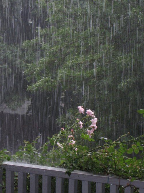 743 Best Images About It's Raining; It's Pouring... On